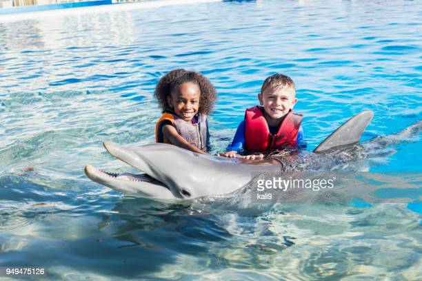 two children standing in water petting dolphin - waist deep in water stock pictures, royalty-free photos & images