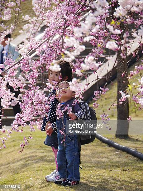 CONTENT] Two children under a cherry blossom tree in the Kenrokuen garden Kenrokuen is one of the Three Great Gardens of Japan
