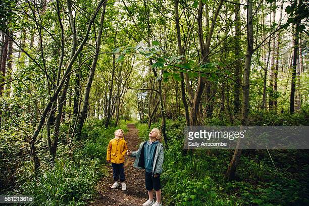 two children walking in a forest - wales stock pictures, royalty-free photos & images