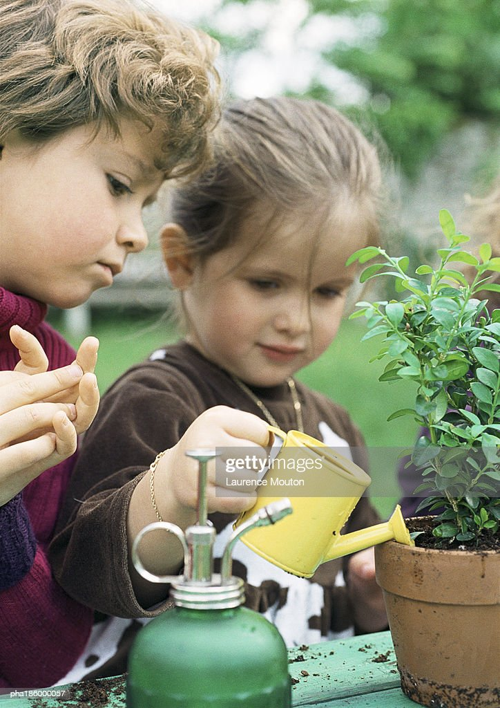 Two children watering plants, close-up : Stockfoto