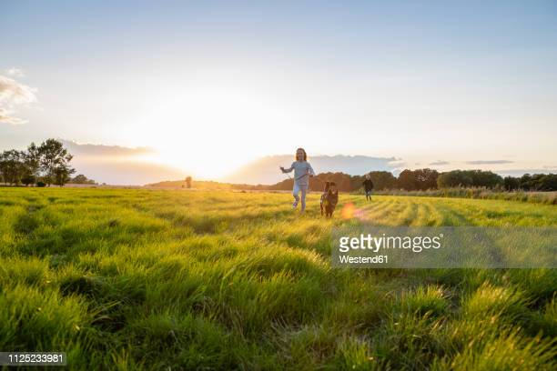 two children with a dog running over a field at sunset - pet equipment stock pictures, royalty-free photos & images
