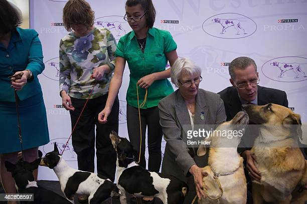 Two Chinook dogs a new breed able to compete attend the 138th Annual Westminster Kennel Club Dog Show press conference at Madison Square Garden on...