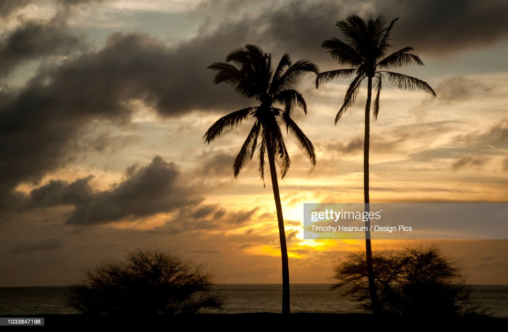 Two coconut palm trees with ocean and dramatic sky beyond at sunset, Papohaku Beach : Stock Photo