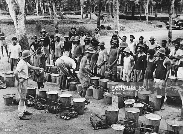 two colonists examine the rubber collected by the workers on a plantation in French Central / Equatorial Africa   Location French Central Equatorial...