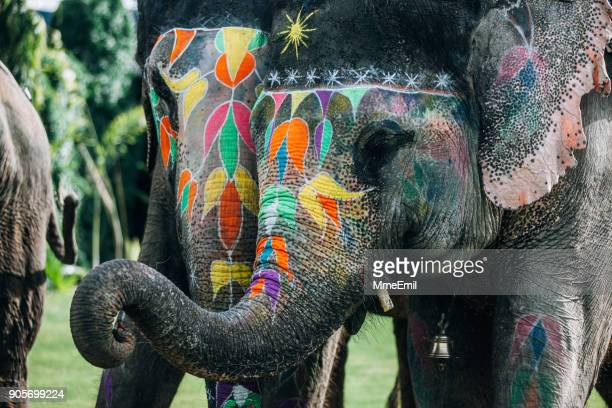 Two colorful elephant face painted and decorated. Jaipur, Rajasthan, India