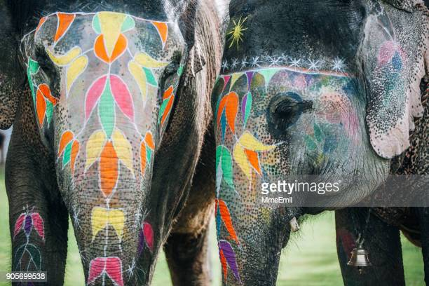 two colorful elephant face painted and decorated. jaipur, rajasthan, india - elephant face stock photos and pictures