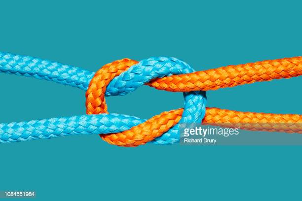 two coloured ropes knotted together - vinculación fotografías e imágenes de stock