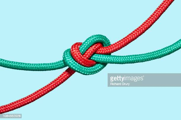 two coloured ropes knotted together - tied knot stock pictures, royalty-free photos & images