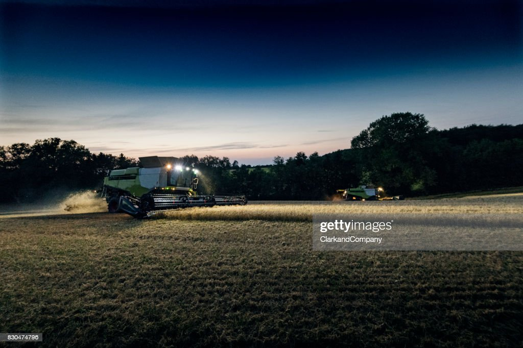 Two Combine Harvesters Harvesting a Field of Organic Rye Late at Night. : Stock Photo