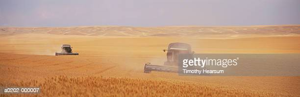 two combines harvesting wheat - timothy hearsum stock photos and pictures