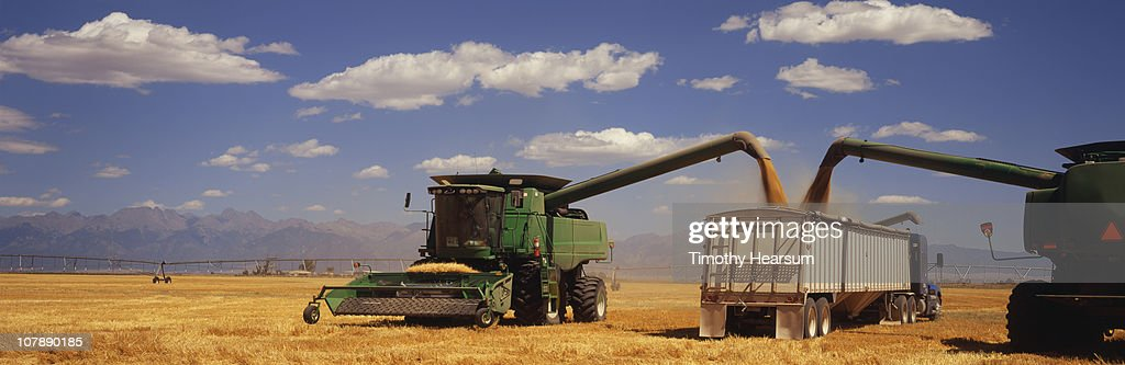 Two combines offloading harvested barley : Stock Photo