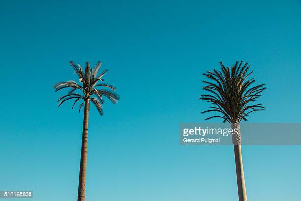 Two communication antennas on fake palm trees