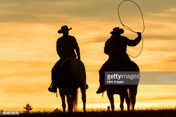 two cowboys riding on horseback in a prairie landscape at sunset, one swinging lasso. - cowboy stockfoto's en -beelden