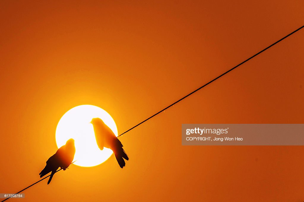Two crows in the sun : Stock Photo