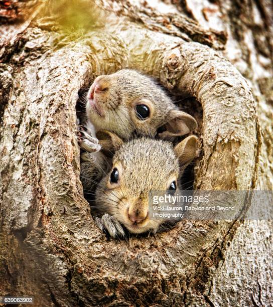 Two Curious Baby Squirrels