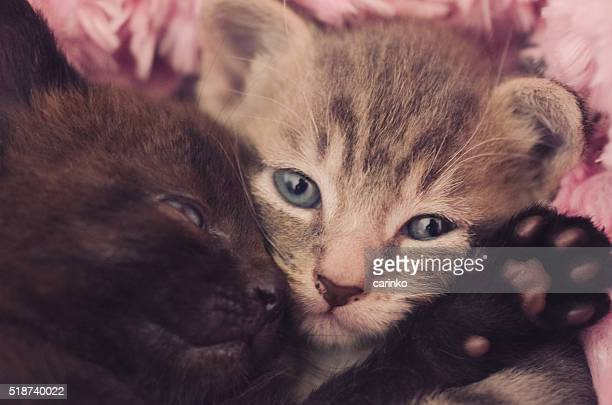 close up of two kittens cuddling