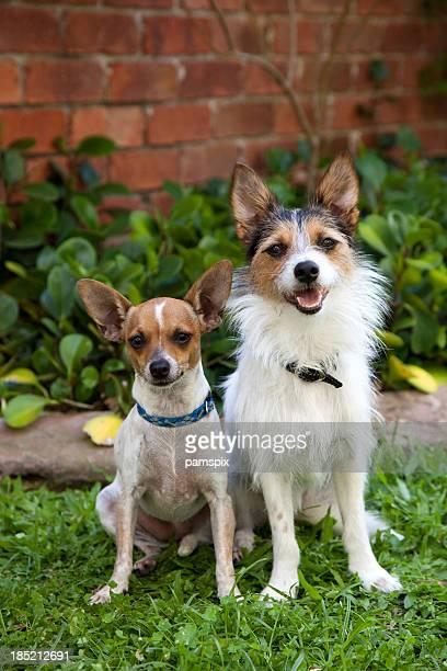 Zwei niedlichen Welpen Hunde sitzen auf Gras im Freien