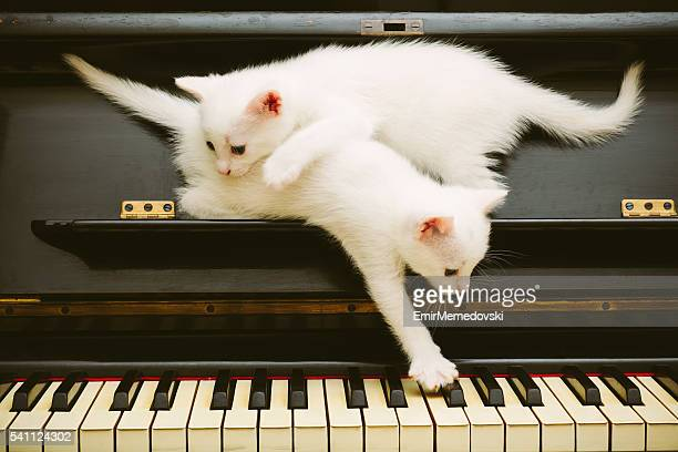 Two cute white playful kittens on piano.