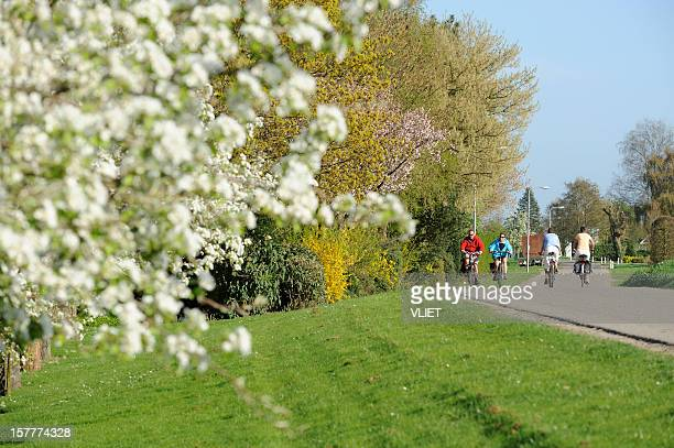 two cycling couples on a dyke road in the netherlands - gelderland stock pictures, royalty-free photos & images