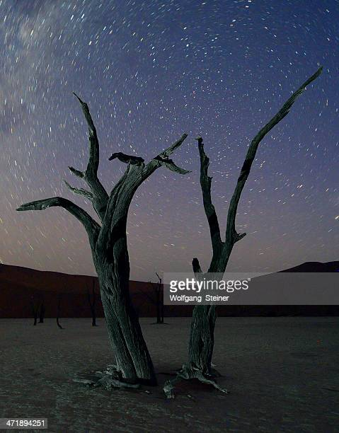 Two dead trees and the Milky Way