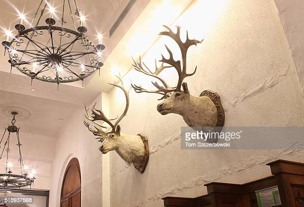 Two deer heads on the wall of the Chateau Fairmont Lake Louise on February 26 2016 in Lake Louise Alberta