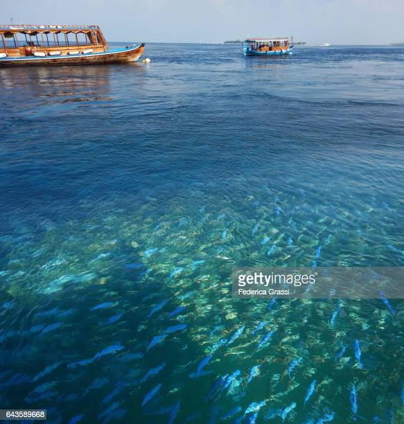 Two Dhoni Moored In Tropical Lagoon With School of Fish in the foreground