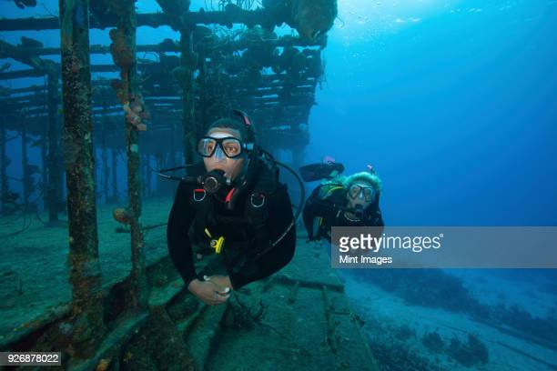 two divers swimming along the remaining structure of a shipwreck. - sunken stock pictures, royalty-free photos & images