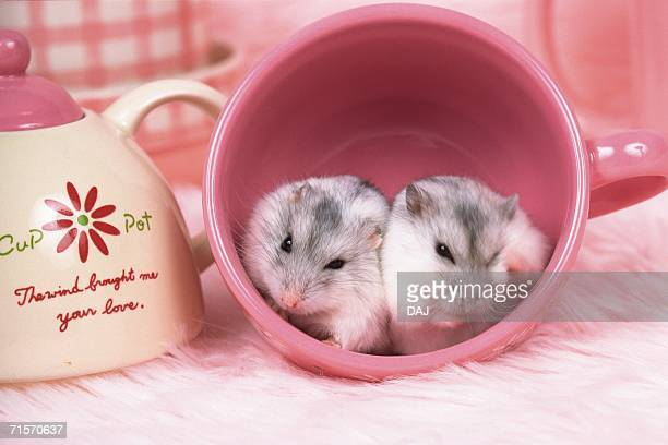 Two Djungarian Hamsters Lying in a Pink Cup, Surrounded by Dishes, Front View, Differential Focus