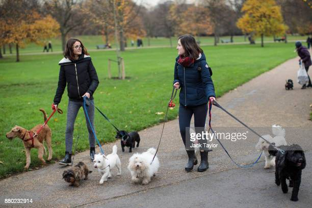 Two dog walkers make their way through Kensington Gardens on November 24 2017 in London England The American actress Meghan Markle will live at...