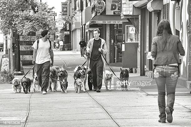 CONTENT] two dog walkers with multiple dogs walking on the streets in Long Island City Queens New York