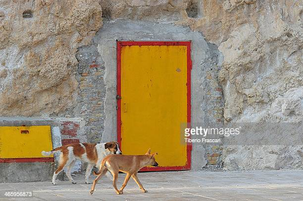CONTENT] Two dogs and a yellow door in the background in Sciacca's fishing harbor