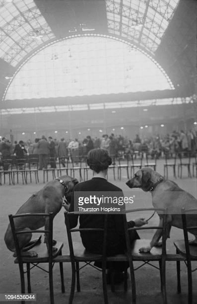 Two dogs and their owner at Crufts dog show, held at the Grand Hall, Olympia, London, 8th-9th February 1952. Original Publication: Picture Post - Dog...