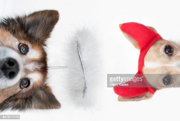 two dogs, angel and devil - devil costume stockfoto's en -beelden