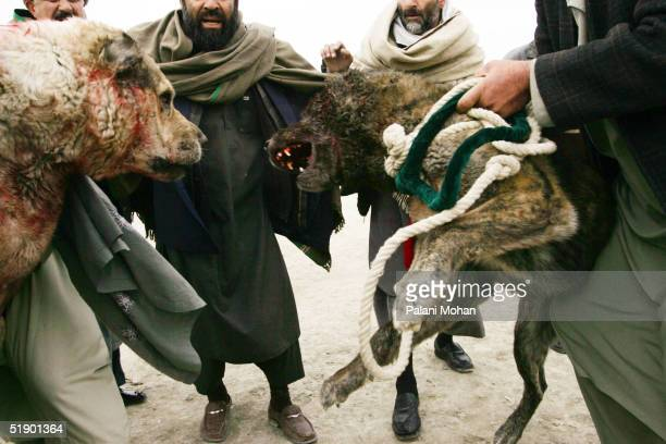 Two dogs are separated by their owners after the end to one of the rounds of the dog fights at a football field in a slum district of Kabul December...