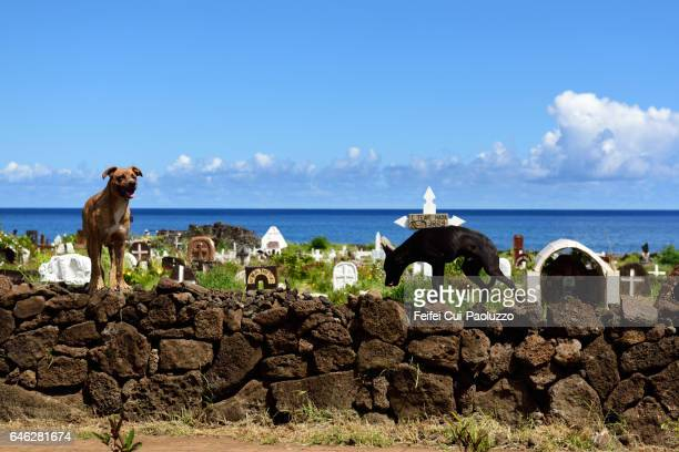 Two dogs at cemetery of Hanga Roa in Easter Island of Chile