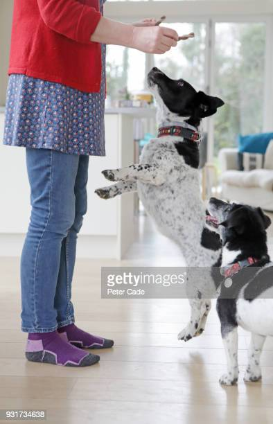 Two dogs being given treats