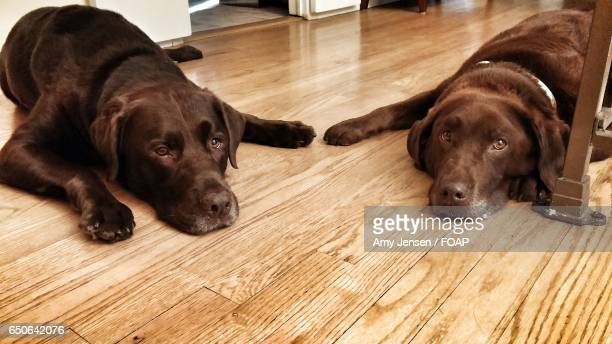 Two dogs lying on floor