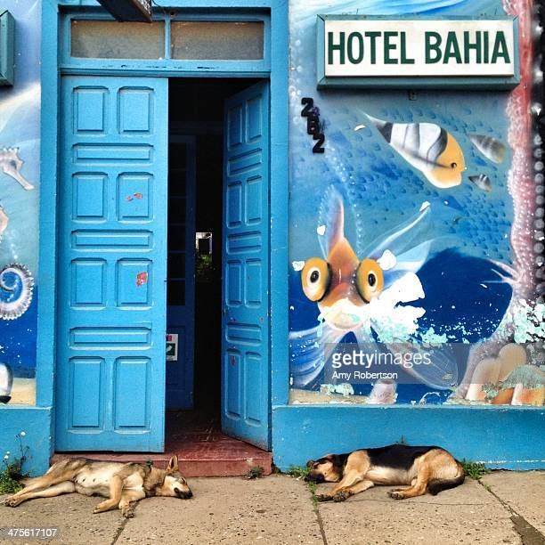 Two dogs nap in front of a small hostel in Chile