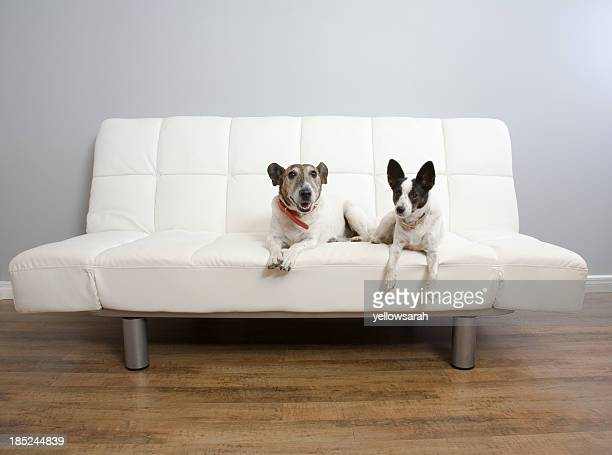 two dogs on a lounge - two animals stock pictures, royalty-free photos & images