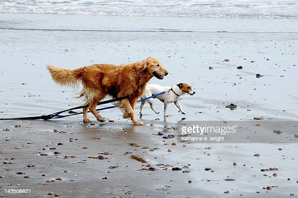 Two dogs on beach, dragging their leashes
