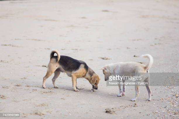 Two Dogs On Beach