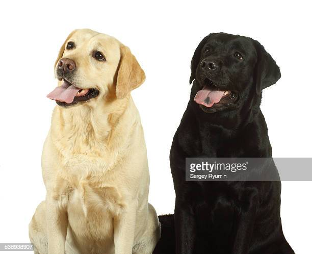 Two dogs on white.