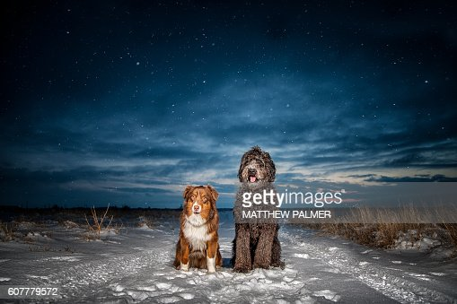 Two dogs sit in evening snow.