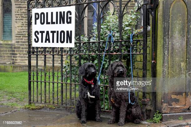 Two dogs sit outside a Polling station at St Matthew's Church in Hayfield on December 12 2019 in High Peak England The current Conservative Prime...