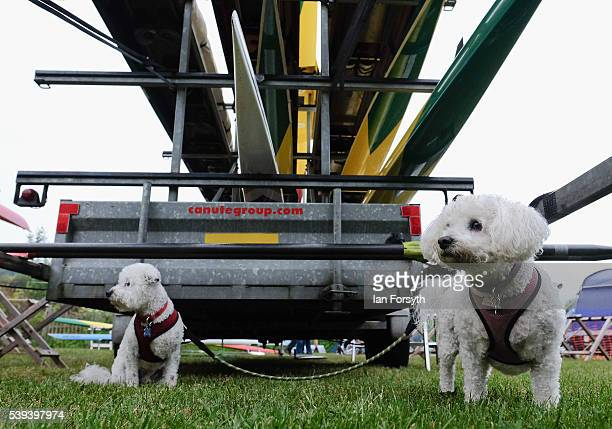 Two dogs sit under a trailer of rowing boats at the 183rd annual regatta on the River Wear on June 11 2016 in Durham England The present regatta...