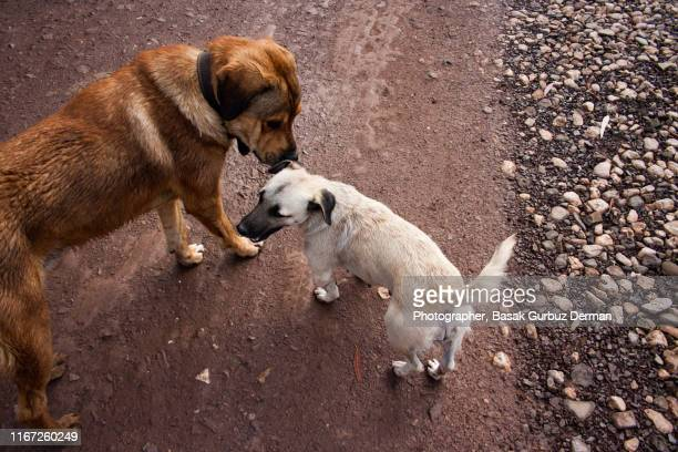 Two dogs smelling each other