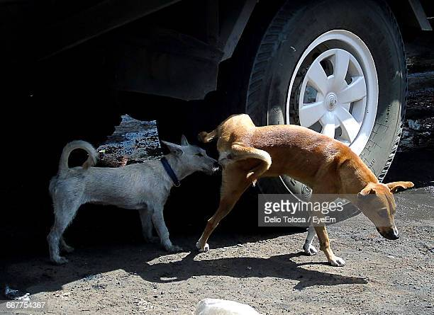 Two Dogs Standing By Vehicle