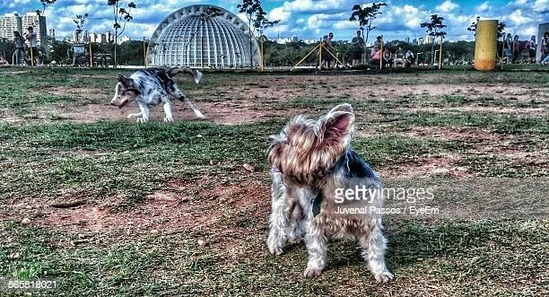Two Dogs Standing In Park