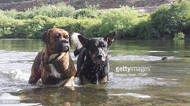two dogs standing in water - hope imagens e fotografias de stock