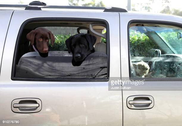 Two dogs wait to receive a canine influenza immunization at Los Gatos Dog and Cat Hospital on January 25 2018 in Los Gatos California Veternarians...